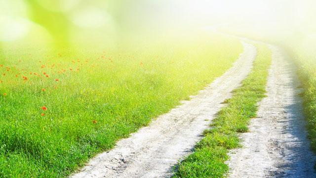 Elegir el camino del amor