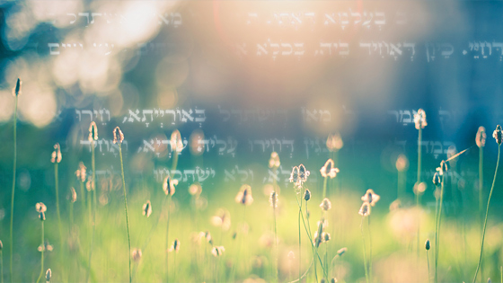 The Zohar on Healing
