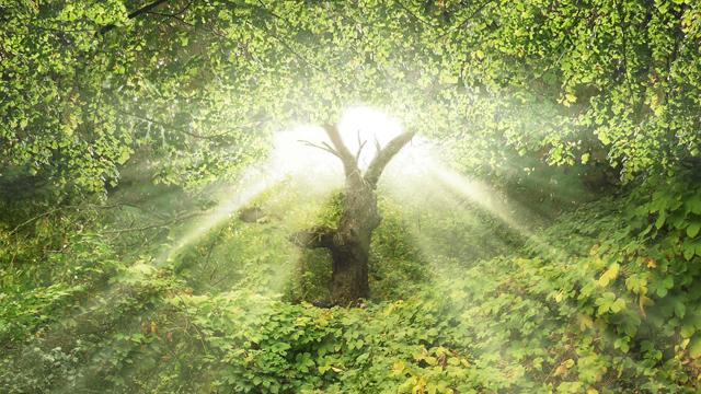 Tree Garden Of Eden